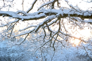 Winter Gratis Stockfotos Hands On Advies