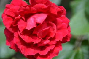 Gratis bloemen fotos - Hands-On Advies stockfotos